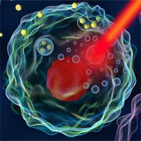 """Các nhà khoa học """"teleport"""" nano vàng vào tế bào ung thư và tiêu diệt chúng từ bên trong"""