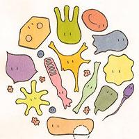 Tế bào được tạo nên từ gì?