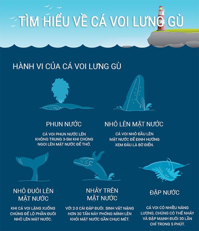Có phải cá voi lưng gù là bá chủ đại dương?