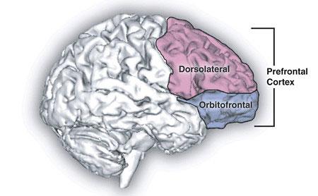 Psilocybin gây biến dạng nhận thức