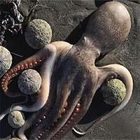 Xác động vật chết la liệt ở bờ biển Nga, người dân lo thảm họa sẽ xảy ra