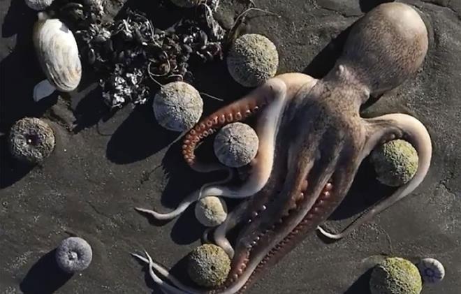 Xác động vật trôi dạt vào bờ biển vùng Viễn Đông của Nga.