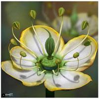 Phát hiện đóa hoa kỳ diệu từ thời thượng cổ 15 triệu năm trước