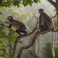 Tìm thấy hóa thạch khỉ lâu đời nhất bên ngoài châu Phi