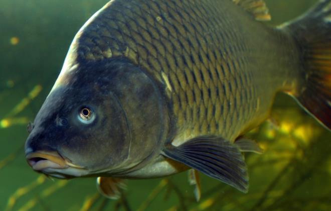 Các vùng chồng lên nhau trên bề mặt vảy cá dẫn đến chuyển động ngoằn ngoèo của chất lỏng.