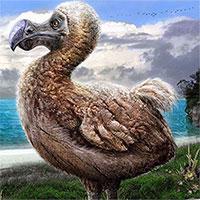 Đây là loài động vật đầu tiên bị con người tận diệt đến tuyệt chủng