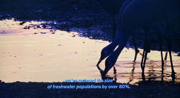 Chúng ta đã làm ô nhiễm 80% lượng nước ngọt toàn cầu