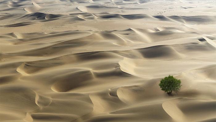Sa mạc tại châu Phi có nhiều cây xanh hơn chúng ta nghĩ.