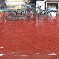 """Tại sao một số vùng trên Trái đất lại xuất hiện hiện tượng """"mưa máu""""?"""