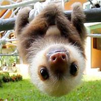 Thế giới động vật - Những điều thú vị bạn chưa biết