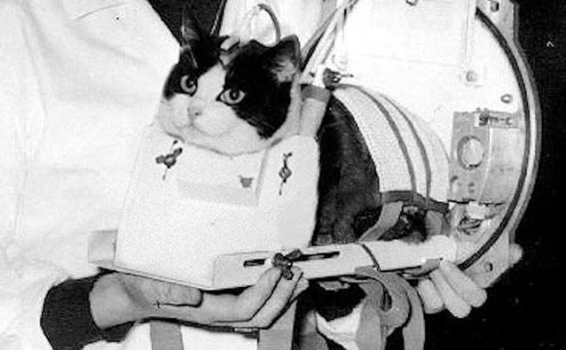 """Felicette – """"cô"""" mèo đầu tiên bay vào vũ trụ"""
