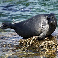 Tại sao hồ Baikal lại có nhiều loài đặc hữu như vậy?