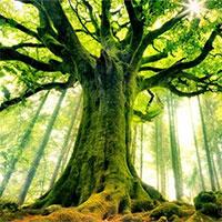 Vì sao cây không thể cao mãi?