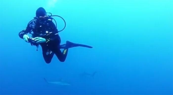 Anita cho biết khi xoay mình, cô thấy cá mập vây quanh khắp nơi, trên dưới, trái, phải.