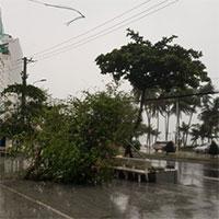 """Hình ảnh bão số 12 """"thổi xiêu vẹo"""" người đi đường, quật đổ cây xanh"""