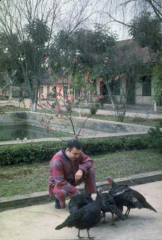 Trung úy Joseph Crecca – cho gà Tây ăn trong trại giam ở Hà Nội.
