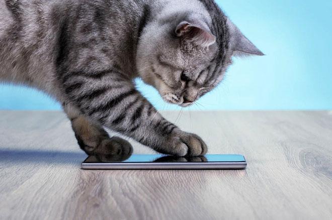 Ứng dụng này có thể chuyển đổi tiếng mèo kêu thành ngôn ngữ mà con người có thể hiểu được.