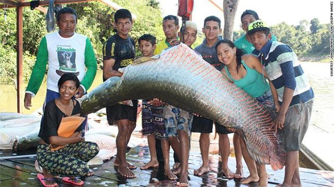 Một con cá hải tượng được đánh bắt theo kế hoạch.