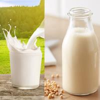 Sữa bò và sữa đậu nành: Đặt lên cân hai loại sữa được ưa chuộng, xem sữa nào nổi trội hơn