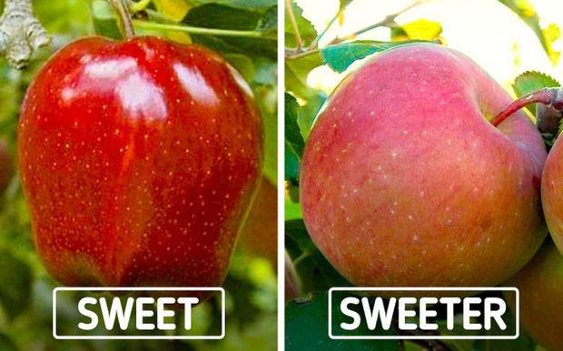 Màu sắc của vỏ táo chẳng liên quan gì đến độ ngọt của chúng
