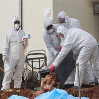 Hàn Quốc xác nhận ổ dịch cúm gia cầm H5N8 mới