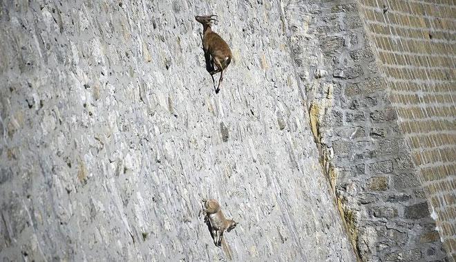 Tường đập đá là một nguồn muối và khoáng chất quý giá.