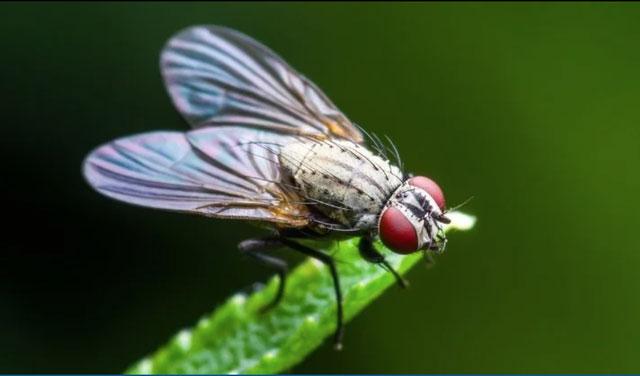 Những loài côn trùng đầu tiên xuất hiện cách đây khoảng 480 triệu năm