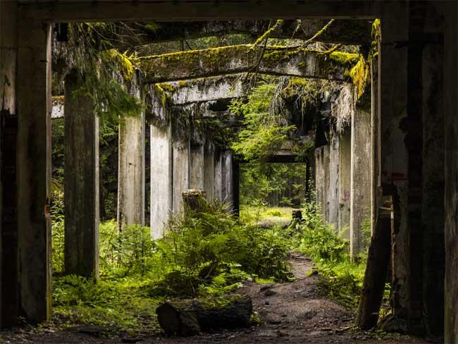 Thực vật phát triển mạnh trong những ngôi nhà bỏ hoang.