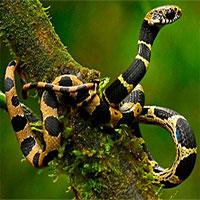 Phát hiện nhiều loài động vật mới trên núi Andes