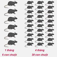 Những giải pháp giúp nhà nông kiểm soát chuột