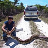 """Trăn khổng lồ xâm chiếm Florida: Chính quyền """"bó tay"""", xem xét kêu gọi người dân ăn thịt"""