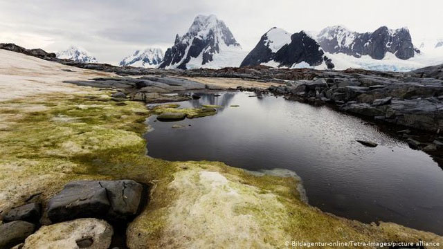 Rêu ở Nam Cực