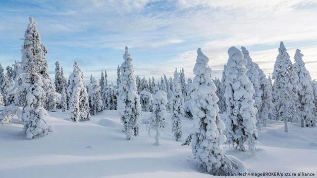 Khu rừng đóng băng