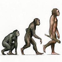 Toàn cảnh quá trình tiến hóa của loài người