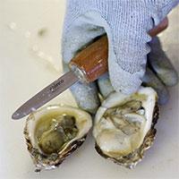 Tìm ra loại hải sản có hàm lượng vi nhựa cao nhất