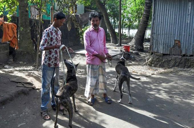 Joton Rabidas (phải) là một trong những người chăn nuôi chó Sarail cuối cùng ở Bangladesh.