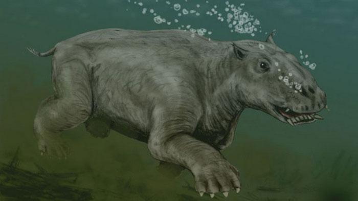 Động vật ăn cỏ bán thủy sinh này thường ăn tảo bẹ và cỏ biển ở phía bắc Thái Bình Dương.