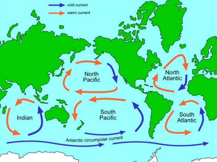 Các dòng hải lưu này thường luân chuyển rác của con người đi vòng quanh các đại dương.