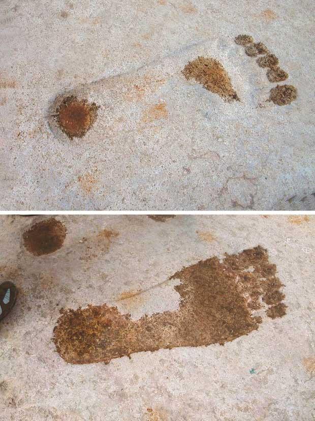 Những dấu chân này phải gấp 3 lần chân người thường.