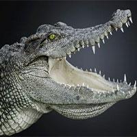 Loài cá sấu hiện đại vẫn có ngoại hình y hệt tổ tiên của chúng cách đây 200 triệu năm trước?