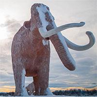 Sự biến mất của loài voi ma mút đã ảnh hưởng đến hệ sinh thái của Trái đất ra sao?