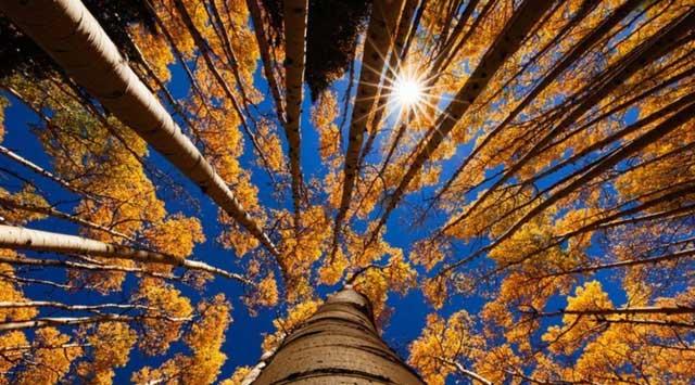 Thực ra Mặt trời đã để lại một số manh mối ẩn trong các vòng cây ngay trên Trái đất