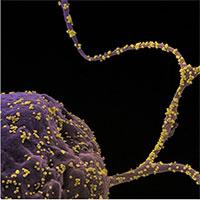 Xuất hiện đột biến mới trong biến chủng nCoV tại Anh