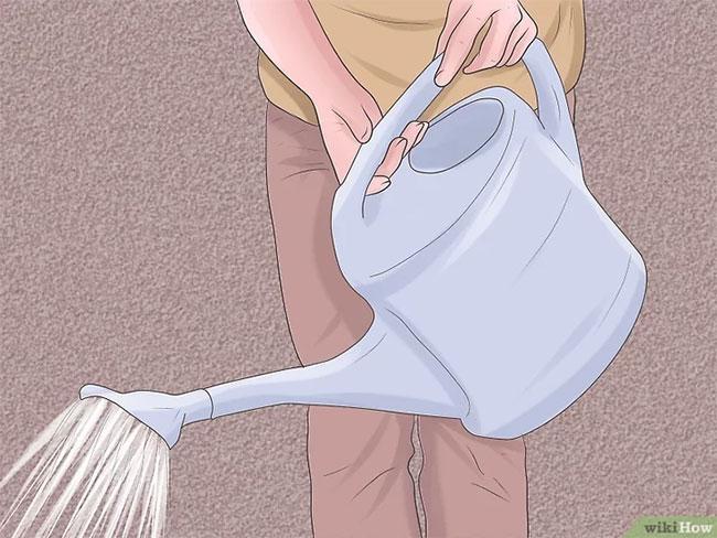 Hoa ly thường không cần quá nhiều nước