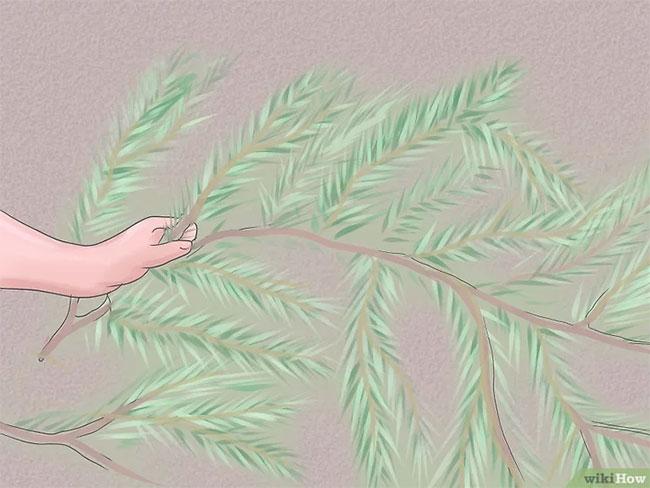 Mùa đông, hãy phủ luống hoa bằng rơm rạ để củ hoa không bị đông lại.