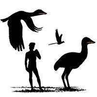 """Phát hiện hóa thạch loài """"phượng hoàng"""" cổ đại"""
