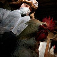 Nga phát hiện loại cúm H5N8 mới lây từ động vật sang người