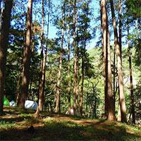 Tại sao đi bộ trong rừng thông lại khiến chúng ta cảm thấy sảng khoái?