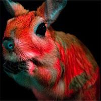 Phát hiện loài động vật mới có khả năng phát quang sinh học trong bóng tối