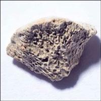 Mảnh xương hơn 10.000 năm tuổi tiết lộ bí ẩn sốc